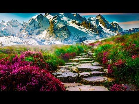 Relax Meditation Zen Music ● Jungle Song ● Relaxing, Healing, Yoga, Spa, Stress Relief, Study Music