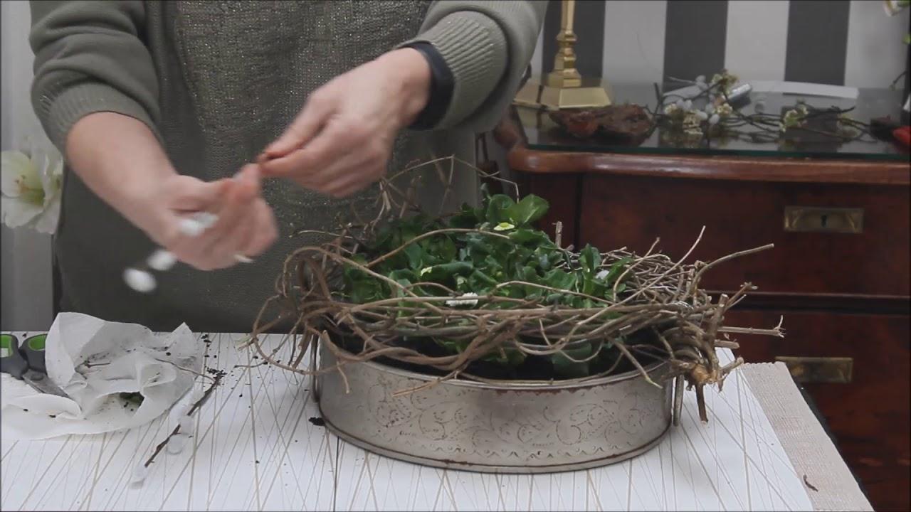 Frühlingsdeko Bellis In Wartestellung Bärbels Wohn Deko