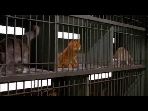 Garfield 1 le film en francais