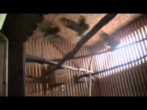 Red Maple Farm -- NY Wildlife Rescue Center