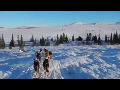 Rough Trail 2016 - North Of Tanana, Alaska - Stan Zuray