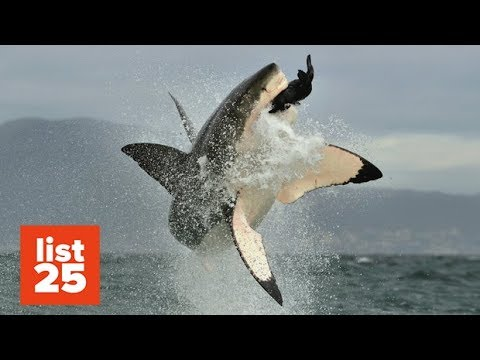 25 Animals That Could Easily KILL You