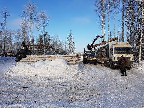 Половина рабочего дня из жизни водителя лесовоза. Вывозка леса на УРАЛе и МАЗе.