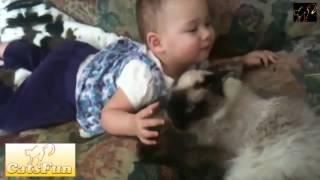 МЕГА крутая нарезка видео с кошками, новые приколы 2017