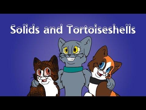 Cat Colour Genetics: Pt 1 - Solids and Tortoiseshells