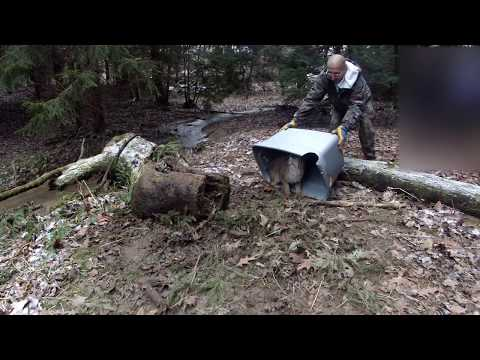 Trapping Fox and Coyotes in PA 2018-19 Season 4 Ep. 3 Mp3