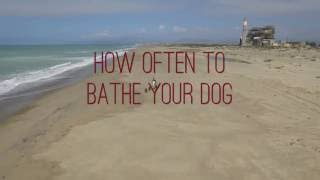 HOW OFTEN SHOULD YOU WASH YOUR DIRTY DOG?!!!
