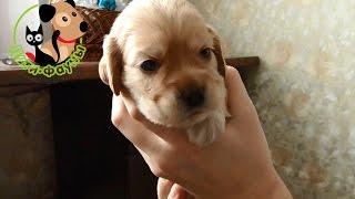Когда забирать щенка, в каком возрасте? Когда лучше сделать прививки?