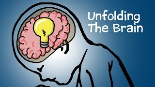 Unfolding The Brain thumbnail