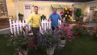 Cottage Farms 3-piece Garden Idols Butterfly Bush Collection with Courtney Cason