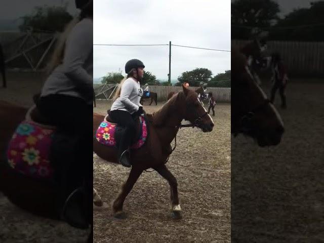 Horse riding xx