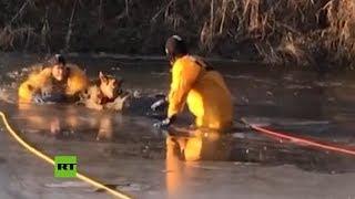 Bomberos rescatan a un perro atrapado en un estanque helado