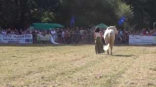 17eme FÊTE du CHEVAL - St ASTIER 24 - 2013 -  Elevage de Merlande: THOOZ des DIEUX & KATIA