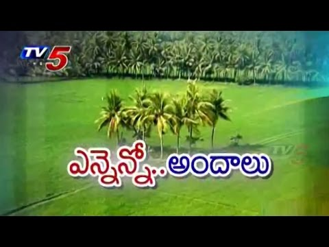 Beautiful Nature @ Konaseema : TV5 News