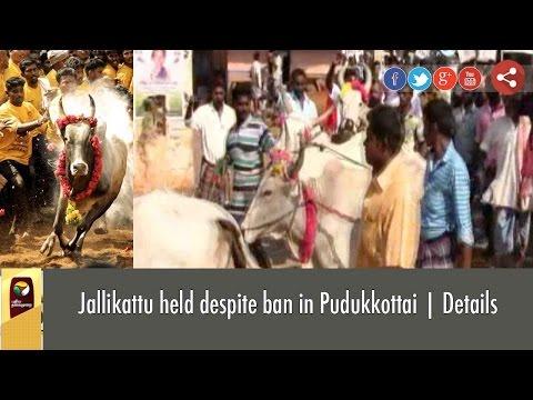 Jallikattu held despite ban in Pudukkottai   Details