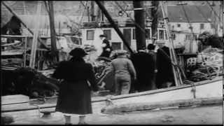 Vintersildfisket i Norge (1950)