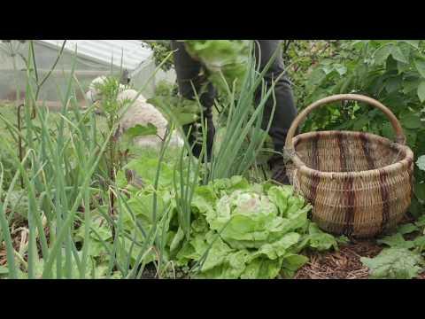 Visite du jardin de Noëlle Guillot, lauréate 2018 du concours Jardiner Autrement