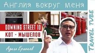 Даунинг стрит 10 | Живет кот мышелов!