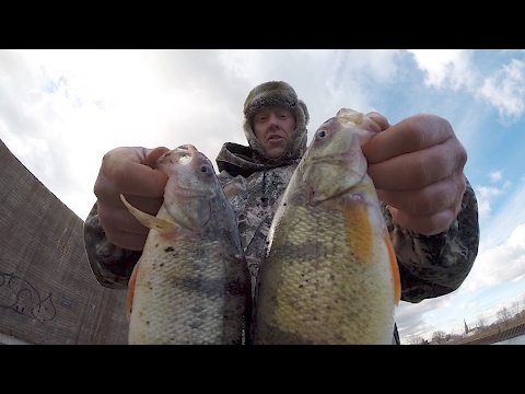 Perch Fishing with Opie - 87th St. Slip