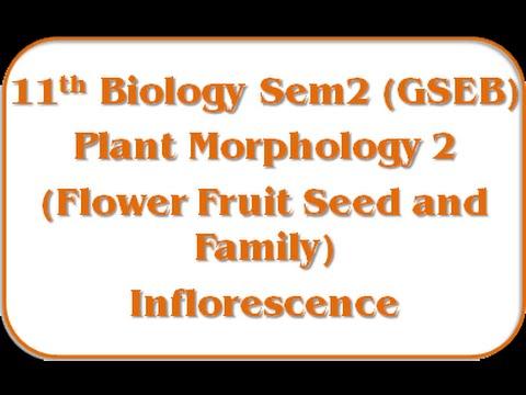 Inflorescence I 11th Biology Semester-2 Jolly Joshipura Gseb