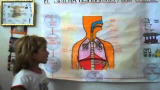 Sistema Respiratorio - Nivel Primaria  -...