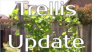 Trellis Update