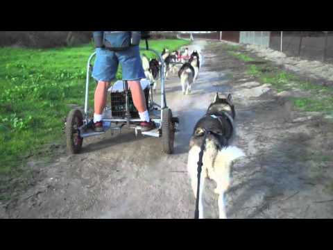Urban Mushing with Skye