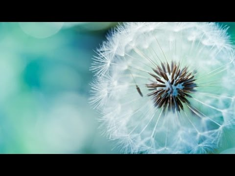 Barcode Brothers - Ambient | Microcosmos Music Video | with lyrics
