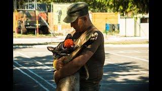 У Сумах змагаються службові собаки