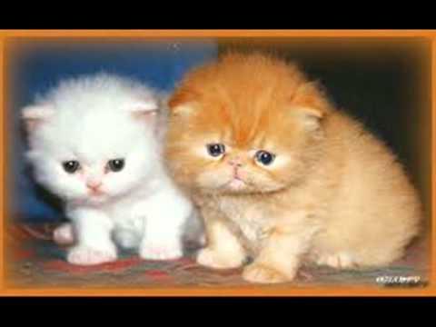Favoloso i gattini teneri ma molto teneri - YouTube AU78