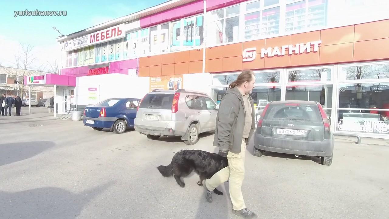 Немецкая овчарка Лада: первый выход в город