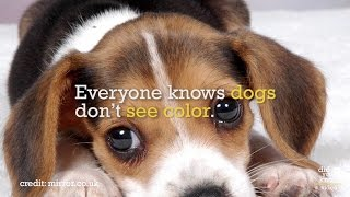 How Dogs, Cats, Birds & Rats See The World - Did You Know? Fact Snacks