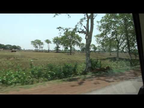 Flora of Dhamtari district of Indian state Chhattisgarh. Part-778 © Pankaj Oudhia