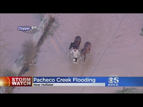 Pacheco Creek Flooding Leads To Resident And Livestock Rescue In Hollister