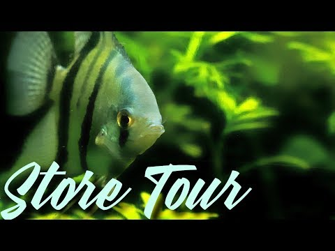 Amazing Aquarium Fish Store Tour Ocean Aquarium In San Francisco!