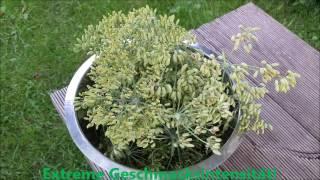 Homemade: Die grüne Fee - Absinth selbst hergestellt