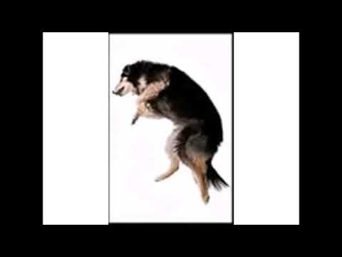 dog dancing we no speak americano but every scream speeds it up