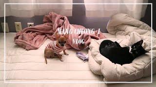 집순이일상브이로그/화장대정리/장보기/된장찌개해먹고 강아…