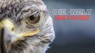 Die Welt der Falken (Tierfilm, Lehrfilm, Naturdoku, Naturfilm, Doku, Tierdoku, deutsch) ganze Dokus