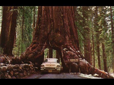 Национальный Парк Секвойя. Особенности географии и трафика. Sequoia NP, USA