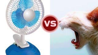 Кошки против вентилятора.