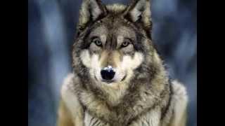 степные волки алга кайсар