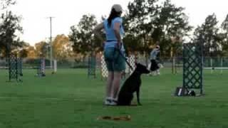 mock agility trial.