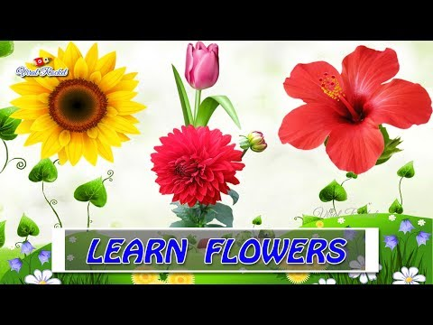 Flower Names For Kids In English - Kids Educational Videos | Learn Flower Names For Toddlers, Babies
