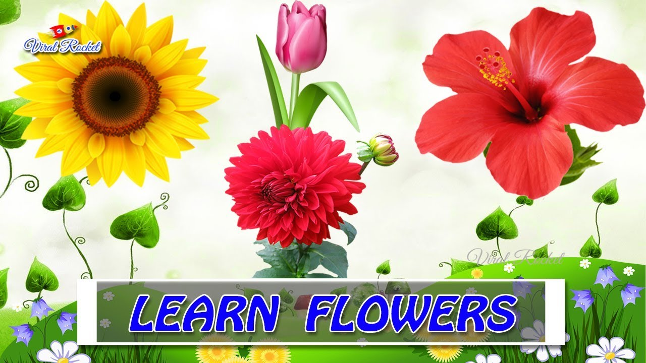 Flower names for kids in english kids educational videos learn flower names for kids in english kids educational videos learn flower names for toddlers babies izmirmasajfo