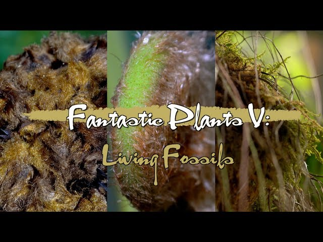 Fantastic Plant V: Living fossils