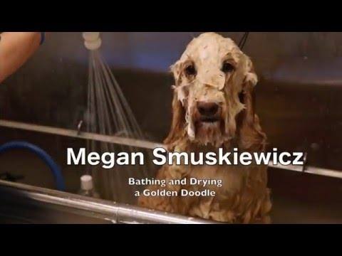 Megan Smuskiewicz - Dog Bathing and Drying new