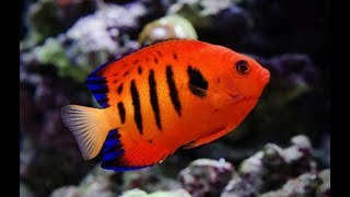 Самые Красивые Рыбы В Мире . Аквариумные рыбы .