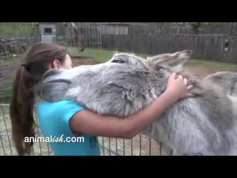 Donkey and girl are best friends