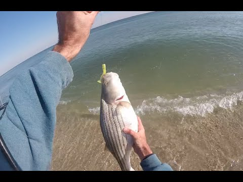 "New Jersey Surf Fishing Striped Bass and Bluefish ""Epic Blitz"" December 4, 2015"